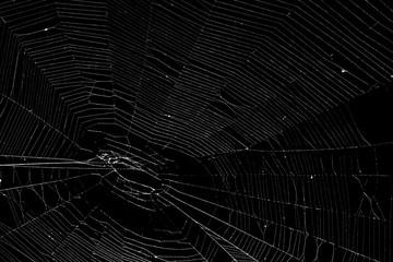 Prawdziwa pająk sieć odizolowywająca na czerni