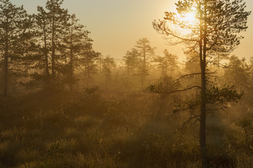 Beautiful foggy and sunny morning in bog area