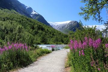 nigardsbreen glacier in Noway