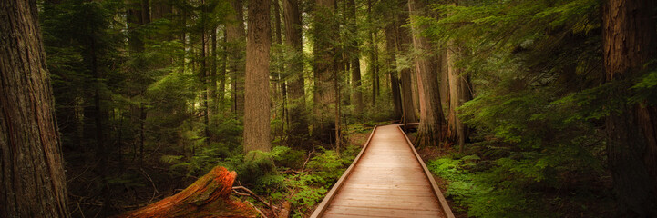 Trail of the Cedars in Glacier National Park, Montana, USA