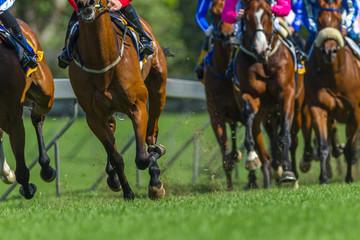 Race Horses Running Legs Hoofs Grass Track