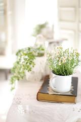 インドアグリーン 緑と花