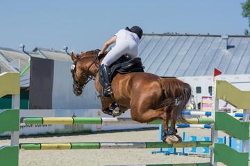 Horse jumping equestrian sport