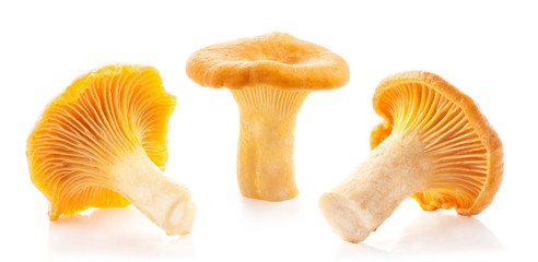 Edible wild mushroom chanterelle (Cantharellus cibarius) isolated on white background