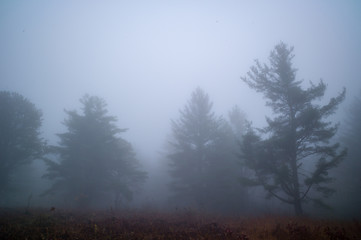 Trees in foggy country field