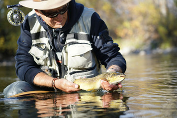 catching a brown trout by a fly fisherman