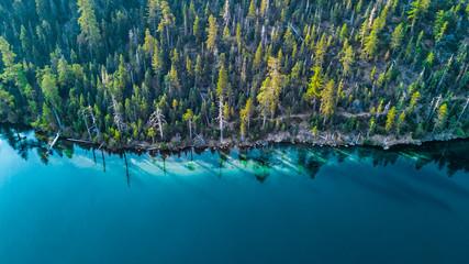 Trutnia widok brzeg przy Jeziornym Tahoe Kalifornia