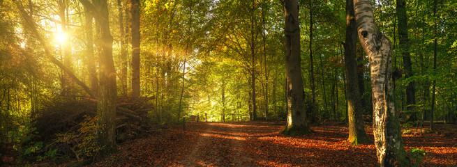 Jesieni lasowa droga z kolorowymi liśćmi