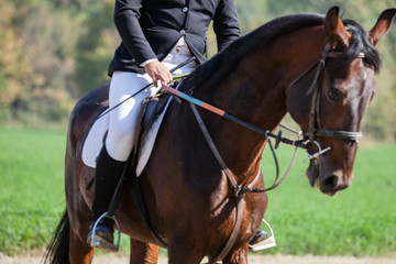 Dressage rider and her horse all set to go in the ring
