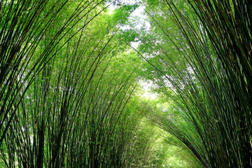 Sunlight Shining Through Natural Bamboo Tree Arch at the Entrance of Chulapornwanaram Temple in Nakornnayok Province, Thailand