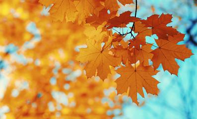 Autumn leaves on the sun.