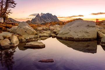 Yellow larch trees in the Enchantments, Washington, USA.