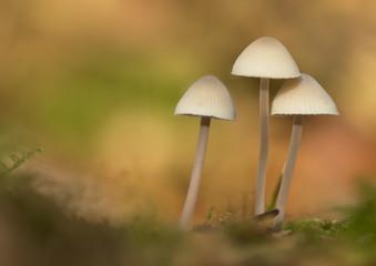 Forest mushroom closeup macro