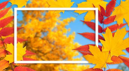 Dekoracyjna rama ozdobiona klonowymi liśćmi jesienią na tle jesiennego krajobrazu z żółtymi drzewami i niebieskim niebem