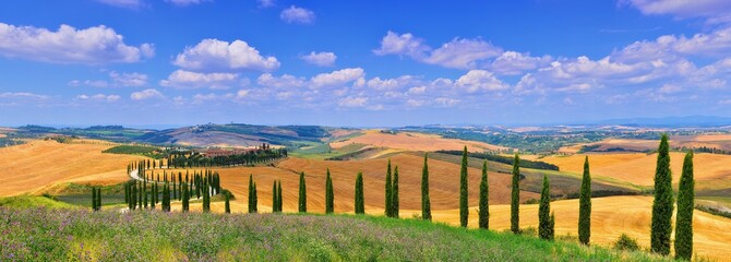 Cypress trees and meadow with typical tuscan house.