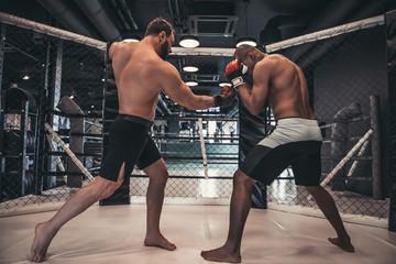 Zapaśnicy na ringu
