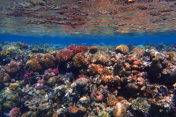 coral reef in Egypt