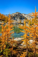 Golden larch trees in the Enchantments, Washington,