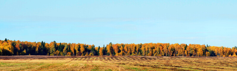 Mown field, forest, autumn. Autumn countryside landscape on sunny day. Panorama