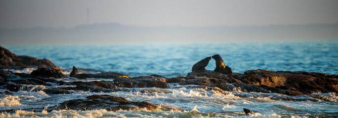Kissing seals. Cape fur seals lay on rocks. Scientific name: Arctocephalus pusillus pusillus.  Waves crash along the stone coast. South Africa. Seal Island in False Bay.