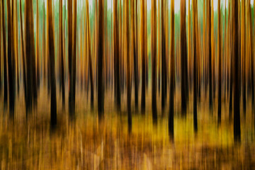 creatively photographed forest with swipe effect