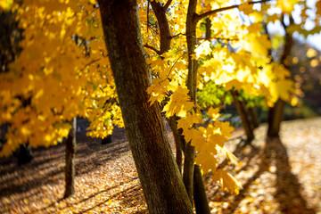 Jesienny spacer po Warszawski parku, Cytadela Warszawska