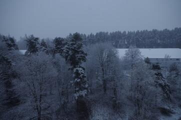 woods in snowfall