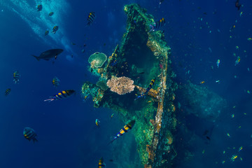 Beautiful underwater world with tropical fish and corals at USS Liberty Wreck, Bali