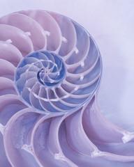 Ekstremalne zbliżenie przekroju skorupy Nautilus w pastelowych różowych i niebieskich kolorach
