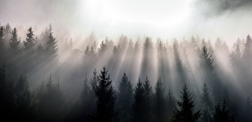 Misty morning view in wet mountain area. Pine Forests in November.