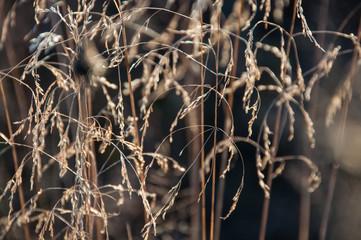 Suszone kwiaty na polu jesienią