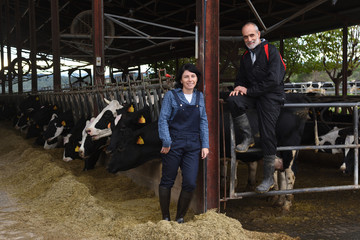 couple farmer with cows