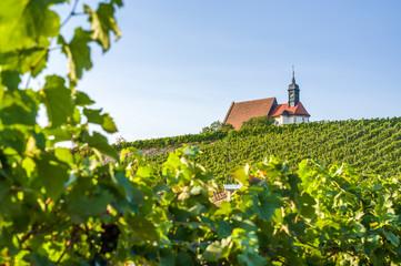 Weinberg, Wallfahrtskirche Maria im Weingarten und blauer Himmel bei Sonnenschein nahe der Stadt Volkach, umrahmt von Weinreben und Weinblätter