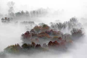 Panorama na mgłowym lesie, Włochy