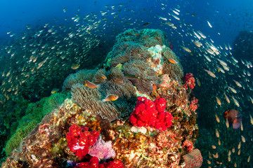 Colorful, healthy tropical coral reef covered in fish and marine life