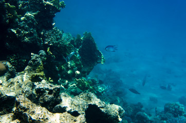 Underwater landscape of the coral reef in the Red Sea