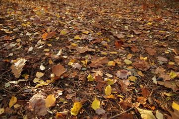 Jesienne liście w lesie