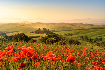 Poppy flower field in beautiful landscape scenery of Tuscany in Italy, Podere Belvedere in Val d Orcia Region - travel destination in Europe