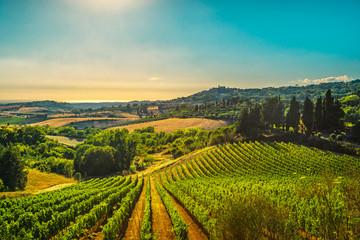 Wioska Casale Marittimo, winnice i krajobraz w Maremma. Toskania, Włochy