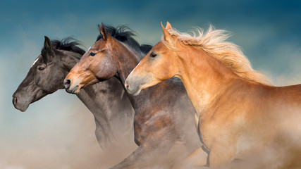 Horses herd portrait in motion with dark blue sky behind