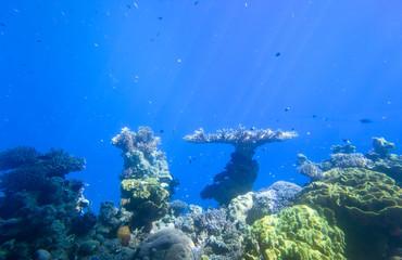 podwodne rafa koralowa morze czerwone