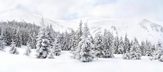 Zimowy krajobraz gór w lesie jodły i polany w śniegu. Góry Karpaty