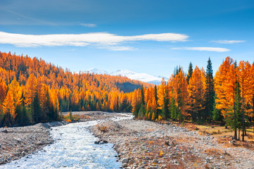 Halny rzeki i jesieni las w Altai, Syberia, Rosja