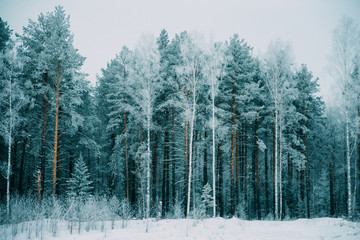 Natural background, scenery: trees in frost on the coldest winter day.