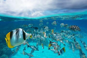 Szkoła tropikalnych ryb pod wodą i niebo z chmurami, podzielony widok nad i pod powierzchnią wody, laguna Rangiroa, Tuamotu, Polinezja Francuska, ocean na południowym Pacyfiku