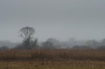 Jesienny pejzaż łąki
