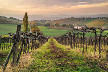 """Cultivated fields and vineyards in the southwest of Bologna: Protected Geographical Indication area of typical wine named """"Pignoletto"""". Bologna province, Emilia Romagna, Italy."""