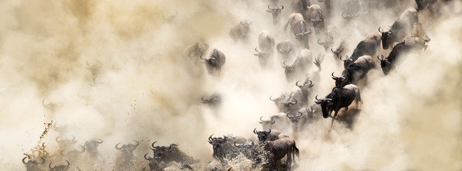 Dusty Wildebeest River Crossing Web Banner