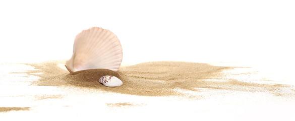 Seashell w piaska stosie odizolowywającym na białym tle