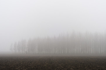 Trees on a misty day in the fields.
